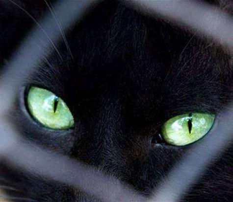 قصة غريبة ومخيفة جن متجسد في قطة سوداء
