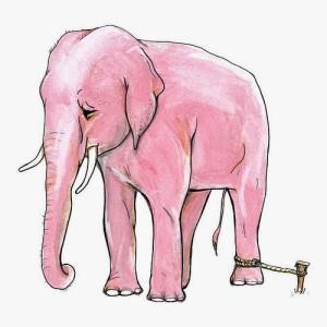 الفيل و الخيط الرفيع