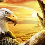 حكايات عالمية , النسر الذى اصبح دجاجة
