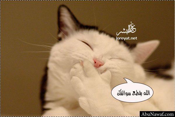 صورة قطة تضحك