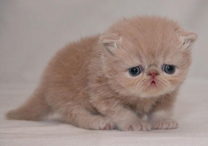آنستى قطة صغيرة من قصص الرحمة 37go7.jpg