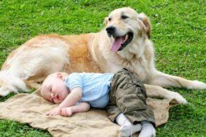 كلب وفى يجلس بجوار طفل نائم