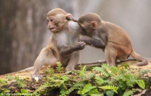 القردان الصديقان