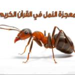 قصص دينية قصة الرجل الذي أسلم بسبب نملة قصة فيها عبرة