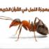 معجزة النمل فى القرآن الكريم