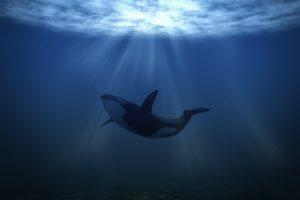 قصة الحوت الظالم والسمكة الذكية رائعة ومثيرة واحداثها مشوقة جداً