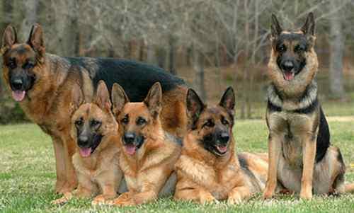 قصة الوزير والكلاب روعه بجد ومعبرة جداً اقرأها لن تندم