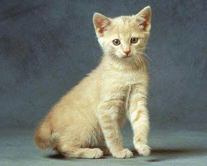 قصص قصيره للاطفال الصغار قصة ميمي والقط الصغير قصة رائعة