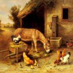 قصص قصيرة للاطفال قصة الحمار المغرور والسلحفاة
