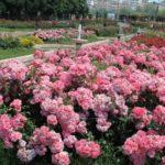 اختفاء الزهور قصة جميلة للأطفال