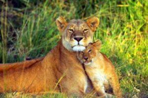 العفو عند المقدرة قصة جميلة من قصص الحيوانات المسلية قبل النوم