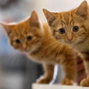 قصة القط والحفرة قصة جديدة للأطفال قبل النوم بقلم : سمر إبراهيم .