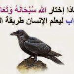 قصة هابيل وقابيل من قصص القرآن الكريم بقلم : محمد عبد الظاهر المطارقي