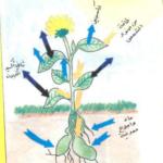 قصة تعليمية جميلة للأطفال بعنوان أوراق النبات من آيات الله