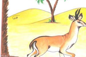قصة الغزالة المربوطة من قصص رسول الله صلي الله عليه وسلم