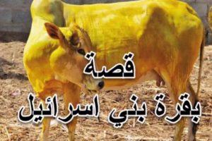 قصص القران الكريم دلاليا وجماليا مكتبة نرجس