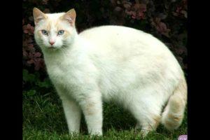 القطة البيضاء جريمة قتل غريبة وبشعة جدا