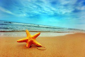 قصة نجمة البحر قصة جميلة فيها درس وعبرة هادفة