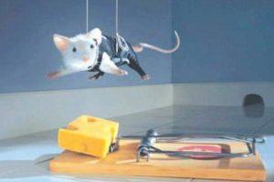 قصص اطفال بدون نت قصة الفأر الطماع وقصة الضفدع الصغير