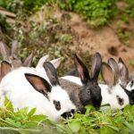 قصة جيش الأرانب قصة أطفال جديدة ممتعة
