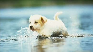 كلب صغير في الماء