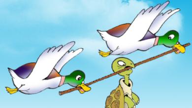 قصة-السلحفاة-والبطتين