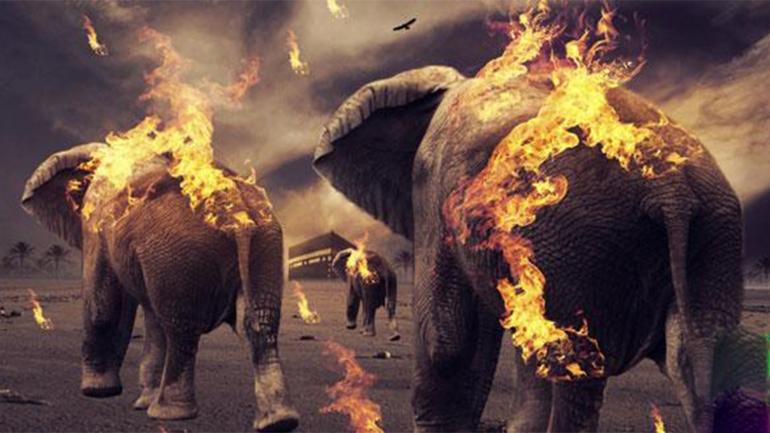 قصص القران سورة الفيل