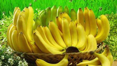 قصة القرد المحتال وقشره الموز للأطفال
