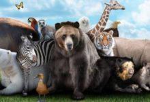 قصص حيوانات