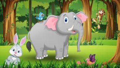قصة الفيل فلفول