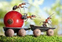النملة المجتهدة