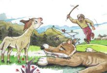 الذئب الماكر وذكاء الثعلب