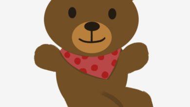 الدب المغامر