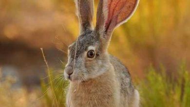 سجى والارنب الذكى
