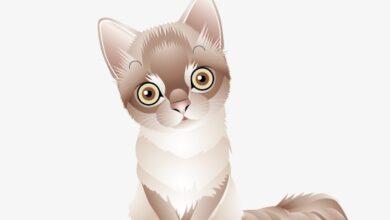 القطة مرمر الحزينة