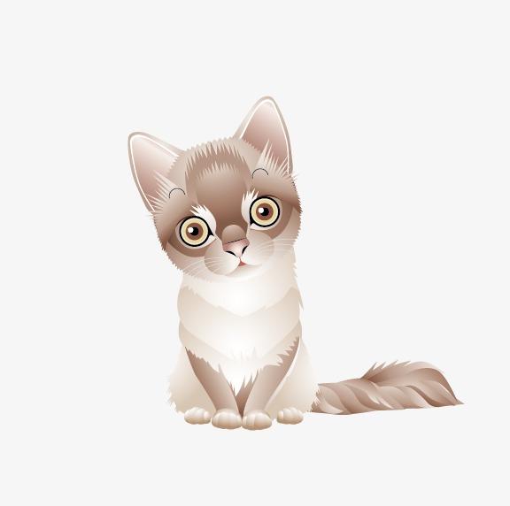 القطة مرمر