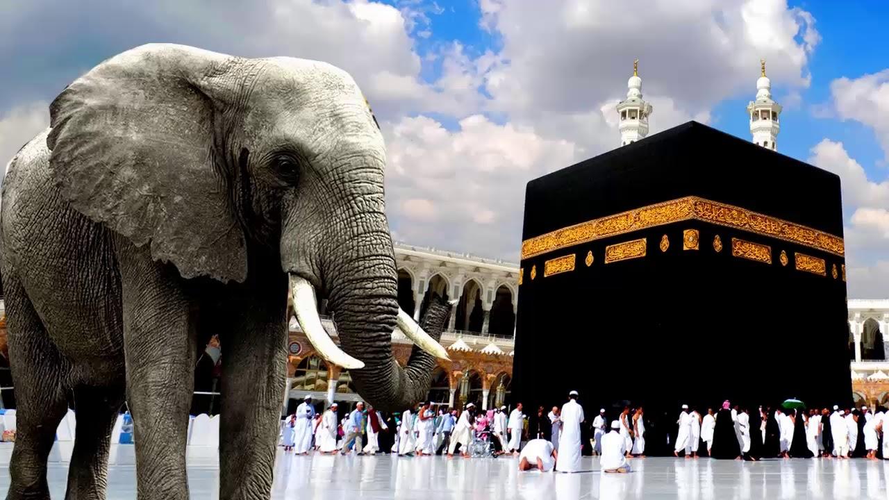 أبرهة والفيل محمود وقصة هدم الكعبة .