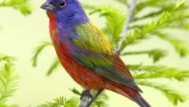 صورة طائر بألوان رائعة