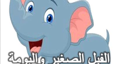 قصة الفيل الصغير والبومة