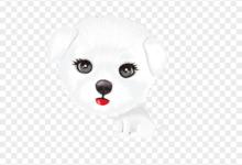 كلبة بيضاء جميلة.