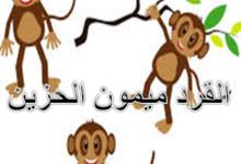 القرد ميمون الحزين