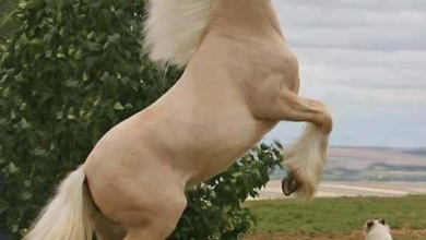 الكلب والحصان
