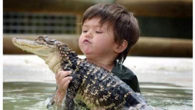 التمساح والصبي الصغير
