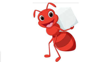 النملة الكسولة وسنابل القمح