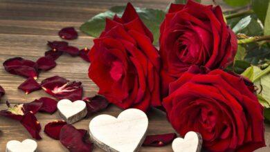 ورود حمراء دلالة الحب.