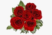 ورود حمراء عنوان الحب بالقلوب.