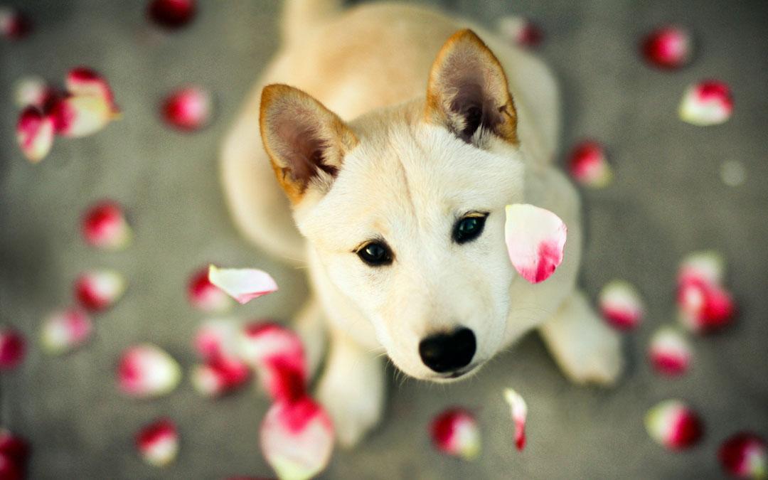 كلب أبيض اللون