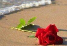 وردة حمراء بجوار مياه البحر