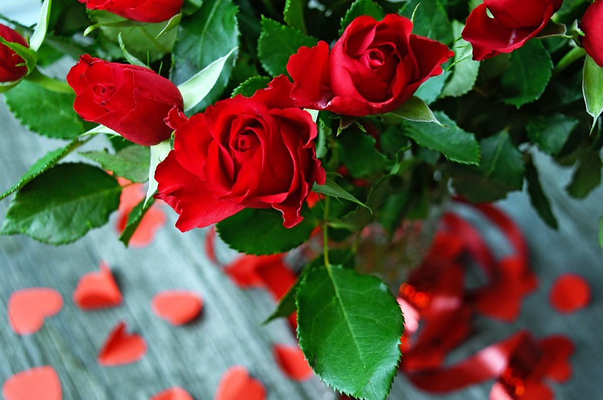 ورود حمراء جميلة