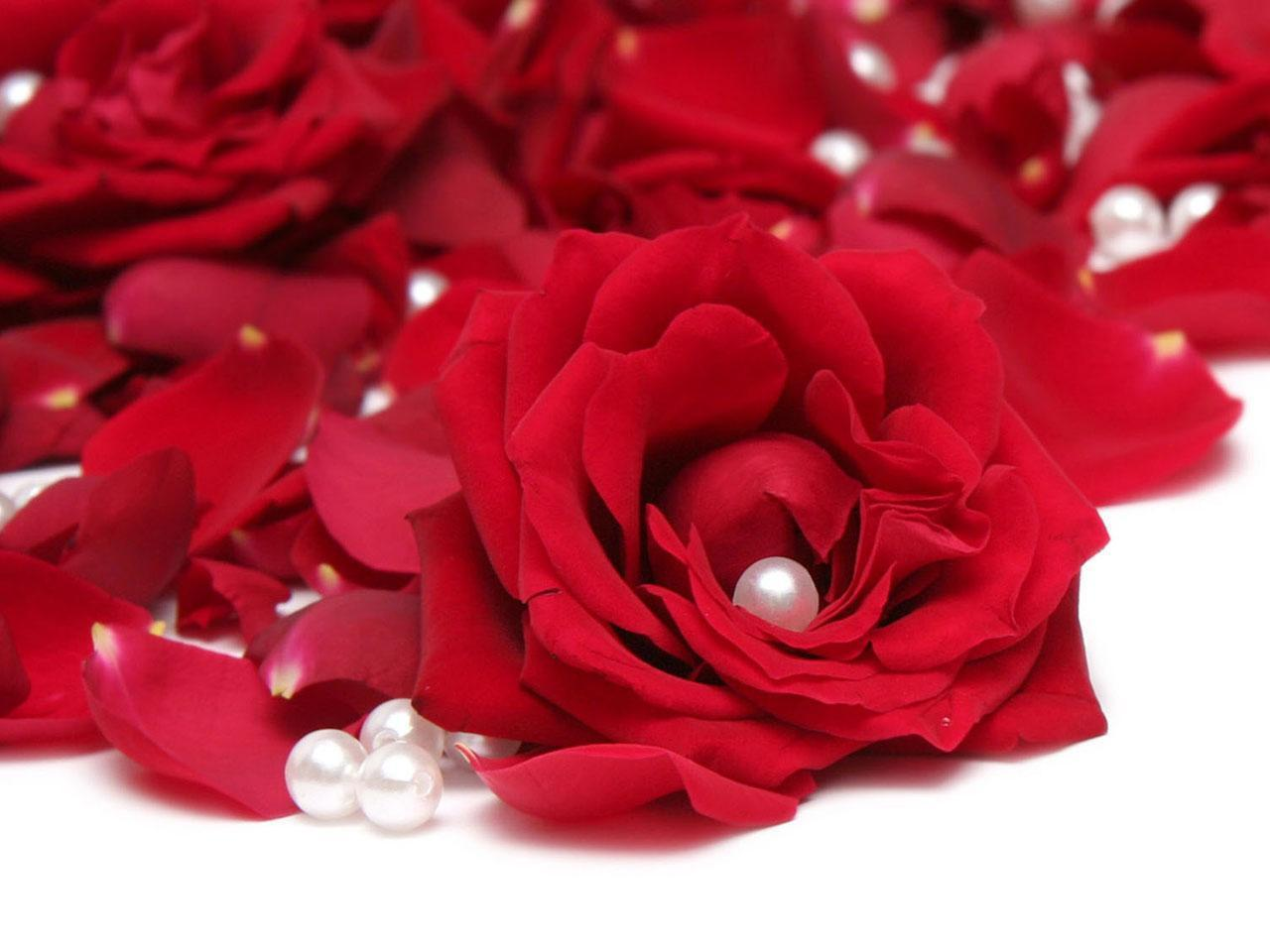 ورود حمراء وحبات لؤلؤ